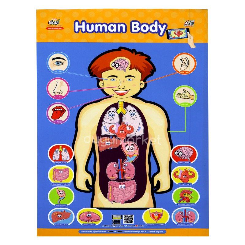 Canlanan Ve Konuşan Mini Halı Organlar